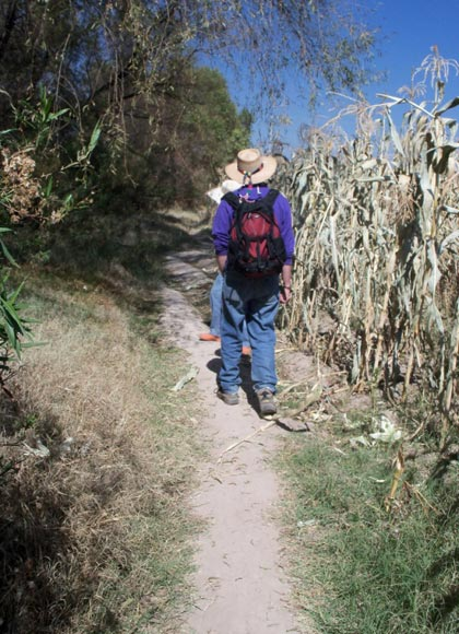 trail along corn